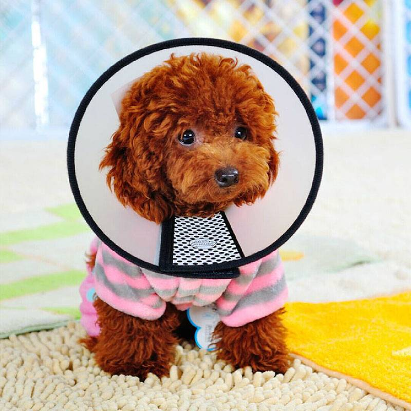 Durable Protective Collar for Pet Grooming